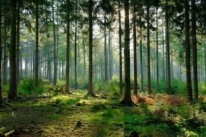 Apie miškų pirkimą